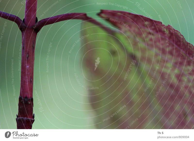 Blatt Natur Pflanze schön grün Sommer rot ruhig Blatt Frühling natürlich elegant Zufriedenheit authentisch ästhetisch einfach Blühend