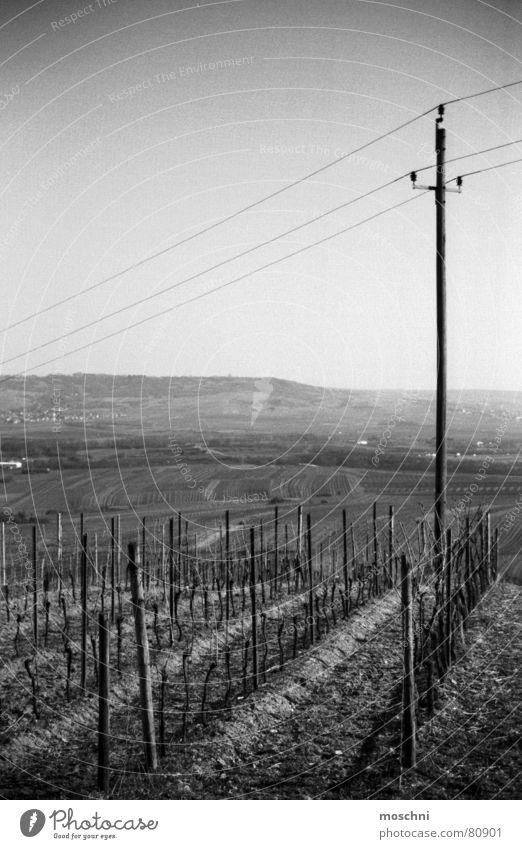 Weinberge Ferne Aussicht Strommast Landwirtschaft Winzer Bingen