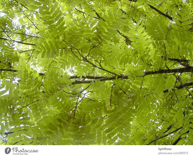 chillin' Natur Baum Sommer Blatt Erholung Frieden Geborgenheit Zweig Sommertag