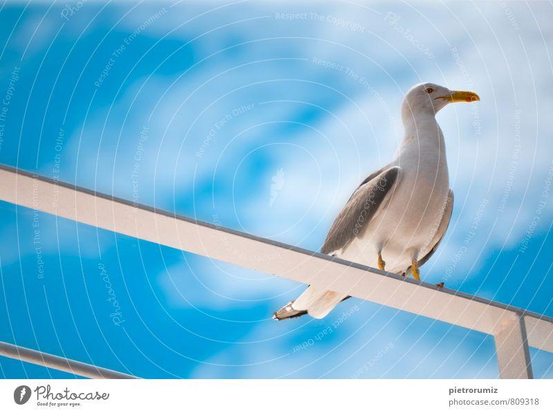 blau weiß Freude Tier Gefühle Liebe grau Denken Glück außergewöhnlich springen Metall Vogel elegant wild Fliege