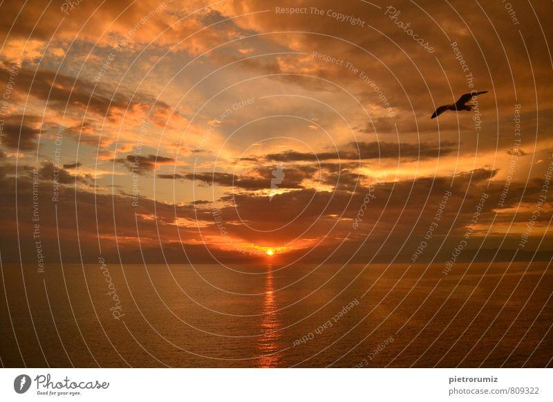 Himmel Natur Ferien & Urlaub & Reisen schön Wasser Sommer Sonne Meer rot ruhig Landschaft Wolken Tier Wärme Bewegung Gefühle
