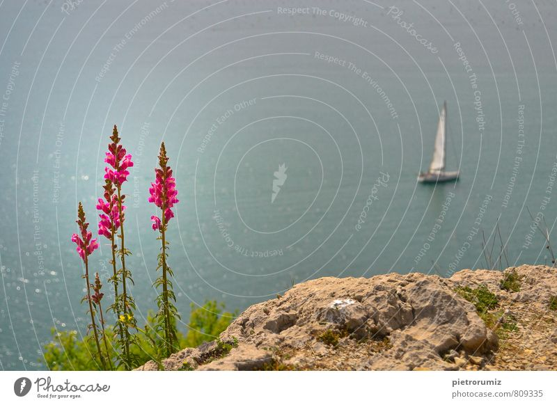 Natur Ferien & Urlaub & Reisen Pflanze Wasser Sommer Meer Blume Landschaft Strand Küste Schwimmen & Baden Freiheit Horizont Erde Wellen Abenteuer
