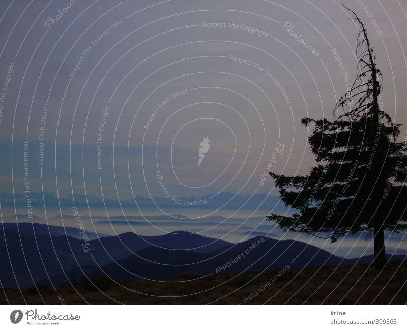 bleu Himmel Natur blau Pflanze Baum Einsamkeit Erholung ruhig Landschaft Ferne Berge u. Gebirge Freiheit Nebel Zufriedenheit ästhetisch Unendlichkeit