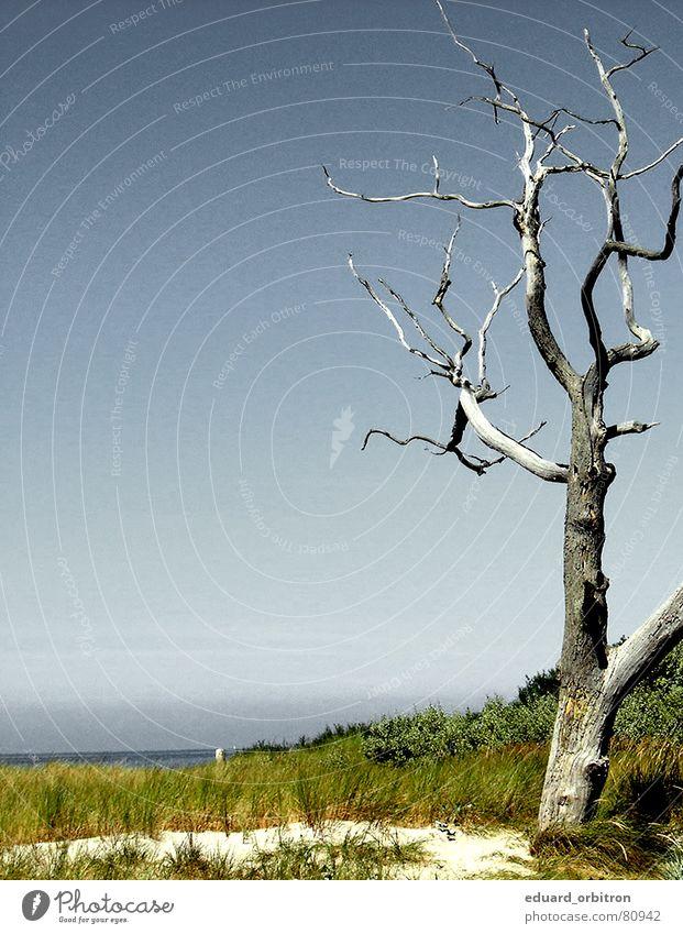 Baumsterben Wasser Baum Meer Sommer Tod Vergänglichkeit Baumstamm Stranddüne Ostsee Abholzung
