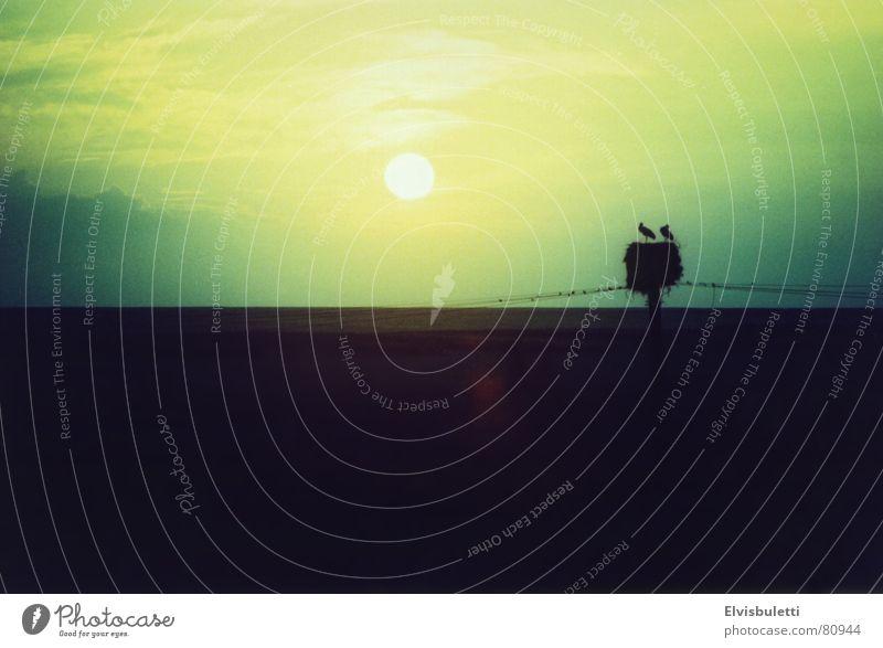 Die Liebenden Storch Blick Stimmung Sonnenuntergang Nest dunkel Cross Processing Laune Abend Ambiente Farbton Umwelt Niedergang Wildnis trist