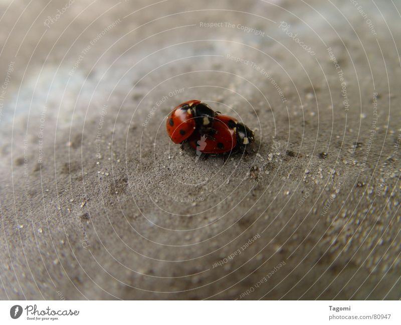 Punktesammler Natur schön rot Freude Tier schwarz Frühling Gefühle lustig Spielen Glück klein Garten Zeit Stein Linie