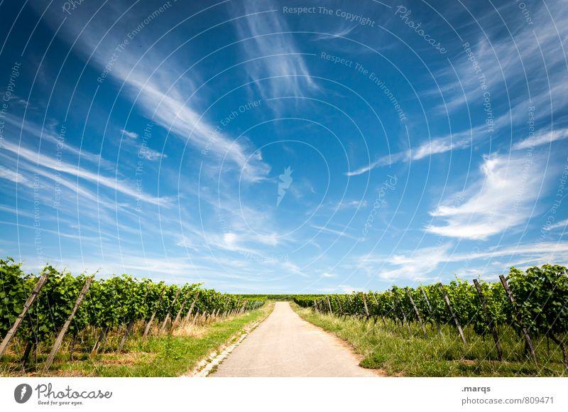 Neuer Wein Landwirtschaft Forstwirtschaft Natur Landschaft Himmel Wolken Sommer Herbst Klima Schönes Wetter Feld Weinbau Straße Wege & Pfade schön Horizont
