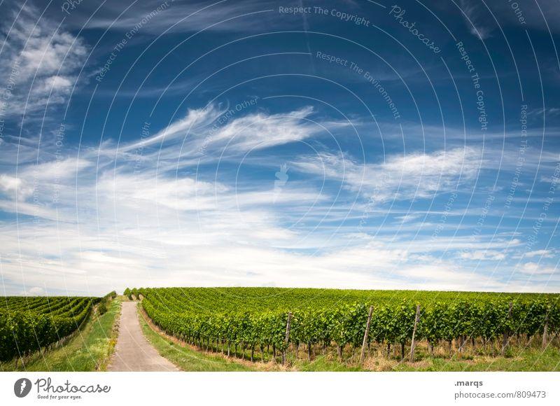Weinbau Ausflug Umwelt Natur Landschaft Himmel Wolken Horizont Sommer Herbst Schönes Wetter Pflanze Nutzpflanze Weingut Straße Wege & Pfade schön Stimmung