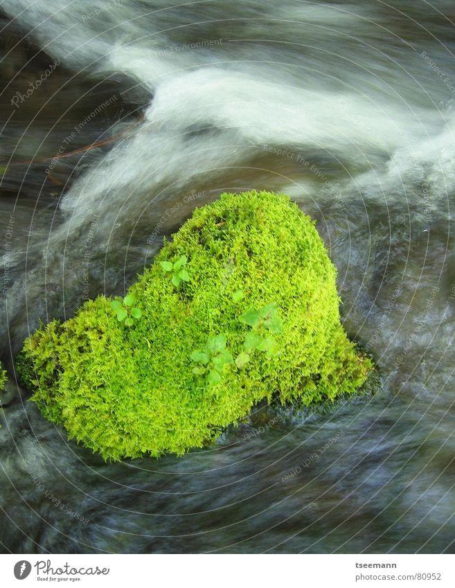 Grün im Fluss Amerika Gras Bach grün USA Grasnarbe Langzeitbelichtung Oregon frisch Wasser mt. hood mt hood Bewegung water motion light cascades mount hood