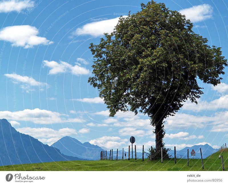 Mein Freund der Baum II... Himmel Baum grün blau Sommer Wolken Straße Wiese Gras Berge u. Gebirge Wege & Pfade Schilder & Markierungen Ast Alpen Hinweisschild Weide