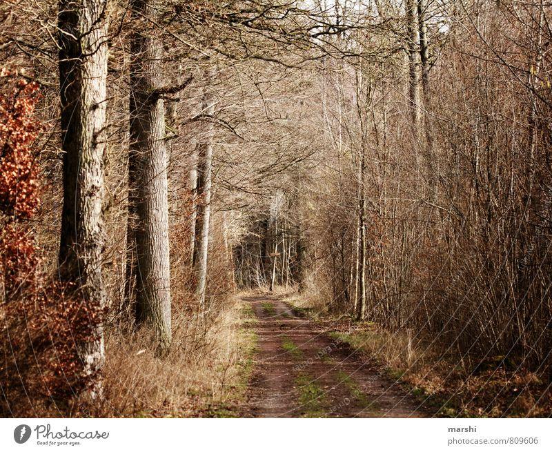 feels like autumn Natur Pflanze Baum Landschaft Wald Umwelt Herbst Wege & Pfade Stimmung Fußweg herbstlich