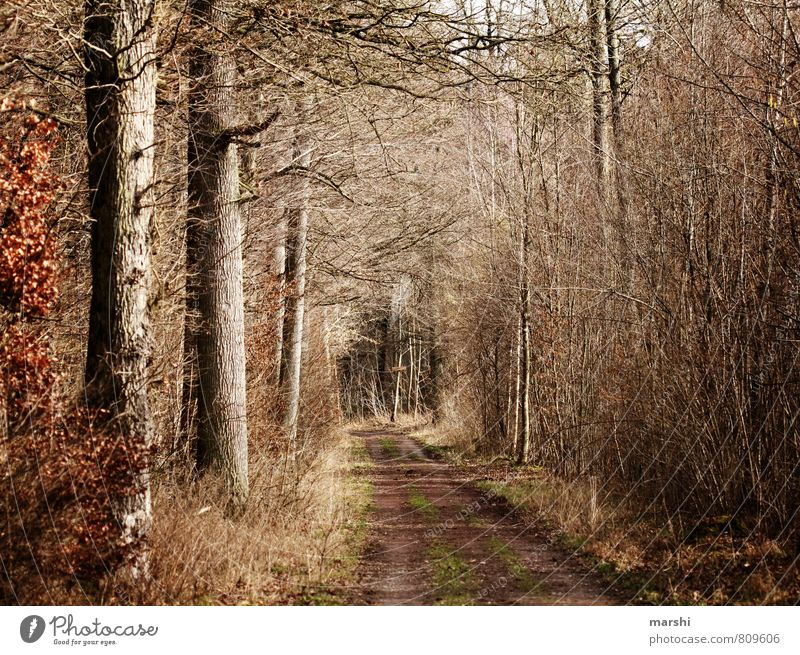 feels like autumn Umwelt Natur Landschaft Pflanze Herbst Wald Stimmung Fußweg Baum herbstlich Wege & Pfade Farbfoto Außenaufnahme Tag