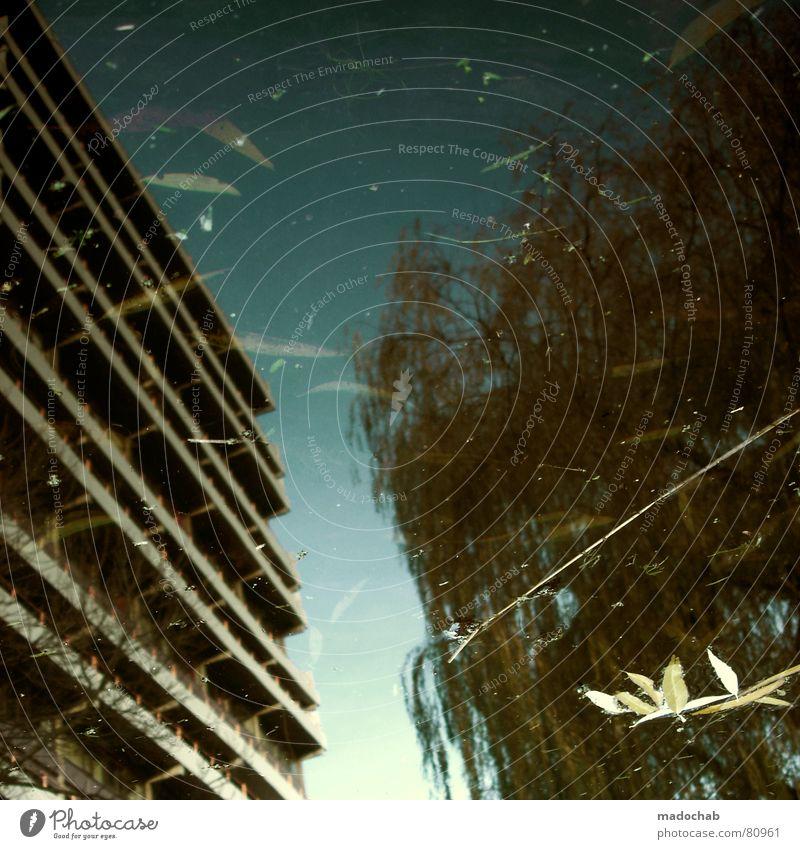 EINKLANG Pfütze wirklich Nebel nass Herbst Haus Hochhaus Gebäude Material Fenster live Block Beton Etage trist dunkel Leidenschaft Spiegel Vermieter Mieter