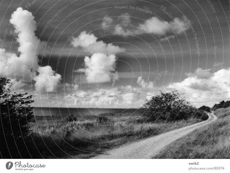 Ringkjöbing Fjord, Dänemark Himmel Natur Baum Pflanze Sommer Meer Ferien & Urlaub & Reisen Wolken ruhig Ferne Umwelt Landschaft Wege & Pfade See Zeit Horizont