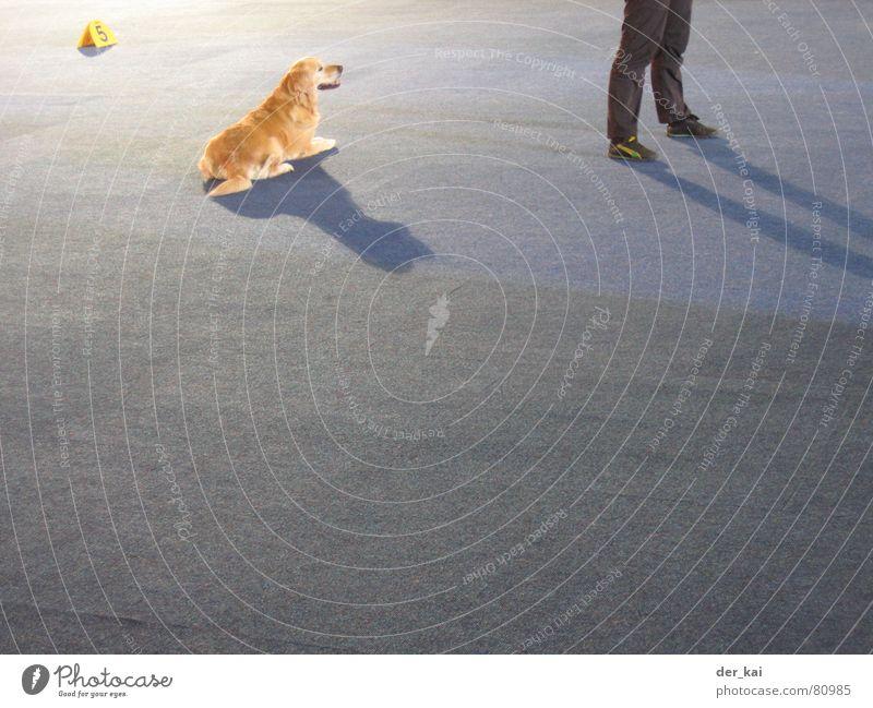 Flocki kommt nicht Mensch blau Tier Hund Fuß Beine 5 Teppich Ausstellung Tiertraining Golden Retriever Hundeausstellung