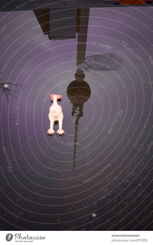 Die Henne die nicht scharf ist! Wasser Tier Ernährung kalt Lebensmittel Herbst Berlin Architektur Vogel Deutschland Regen Beton Asphalt Spielzeug dünn
