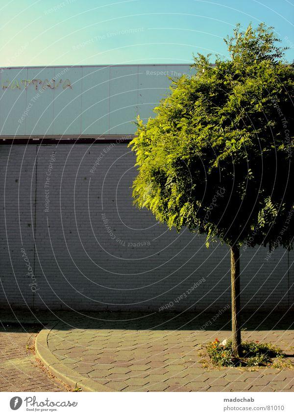 MIT KLEBER Baum Blatt grün Botanik Baumstamm Wand Mauer Stadt frisch sprießen Wachstum Grünfläche Baumstruktur driften Umwelt Innere Kraft Park Hierarchie