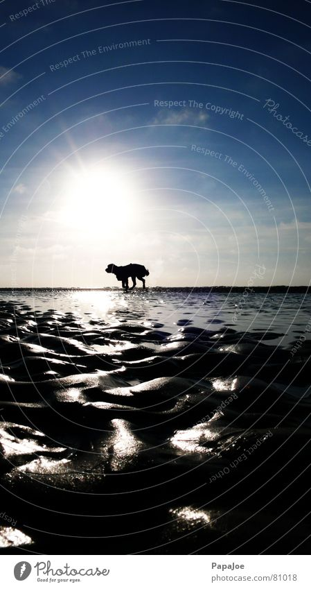 Hund am Strand Natur Sonne Meer blau Winter Wolken Tier kalt Eis Beleuchtung Küste Wind Wetter Umwelt