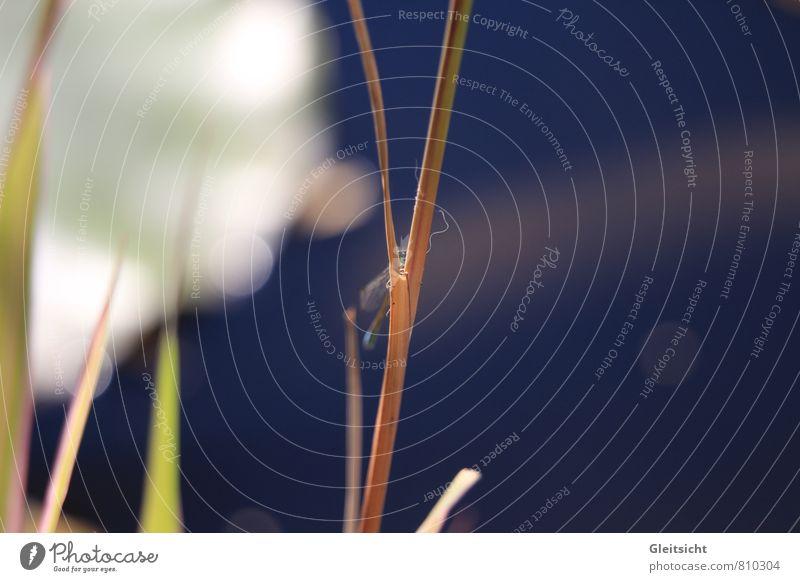 ich sehe dich... komm nicht näher! Natur Tier Wasser Sommer Schönes Wetter Pflanze Gras Wildpflanze Schilfrohr Garten Moor Sumpf Teich Wildtier Tiergesicht