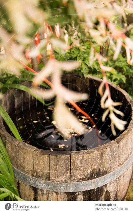 wasser fass Pflanze Wasser Baum Blume Landschaft Haus Tier Garten Park Wohnung Lifestyle Häusliches Leben Zufriedenheit Sträucher retro einzigartig