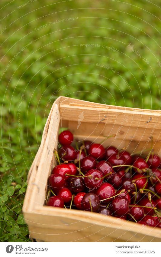kirschen ernte Natur Pflanze Baum rot Freude Gesunde Ernährung Garten Lebensmittel Häusliches Leben Frucht Zufriedenheit Fröhlichkeit Lebensfreude Bioprodukte
