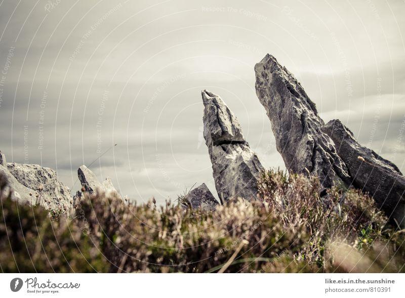 rocky ireland Berge u. Gebirge Umwelt Natur Landschaft Pflanze Urelemente Erde Himmel Sträucher Moos Felsen Stein Steinblock Republik Irland karg grau Spitze