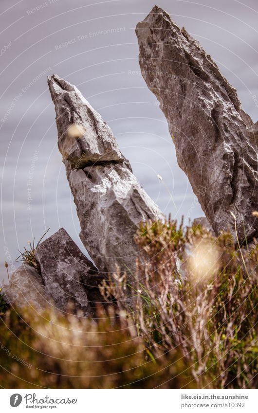 steiniges irland Berge u. Gebirge Umwelt Natur Landschaft Pflanze Urelemente Erde Himmel Sträucher Moos Felsen Stein Steinblock Republik Irland karg grau Spitze