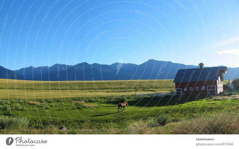 Idyllic Oregon I - Panorama Hügel Wiese Gras grün Pferd rot Scheune USA Amerika Himmel Wallowa Mountains Panorama (Aussicht) Berge u. Gebirge pferdchen red blau