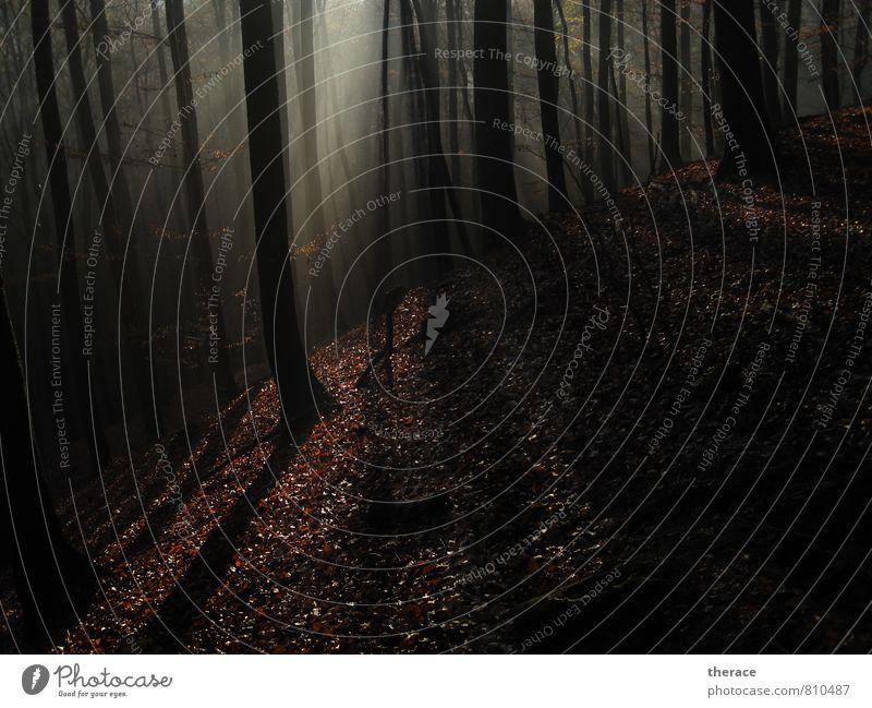 Licht im Nebel Natur Ferien & Urlaub & Reisen schön Baum Erholung Blatt ruhig Wald Herbst wandern Abenteuer Landwirtschaft Hügel Baumstamm