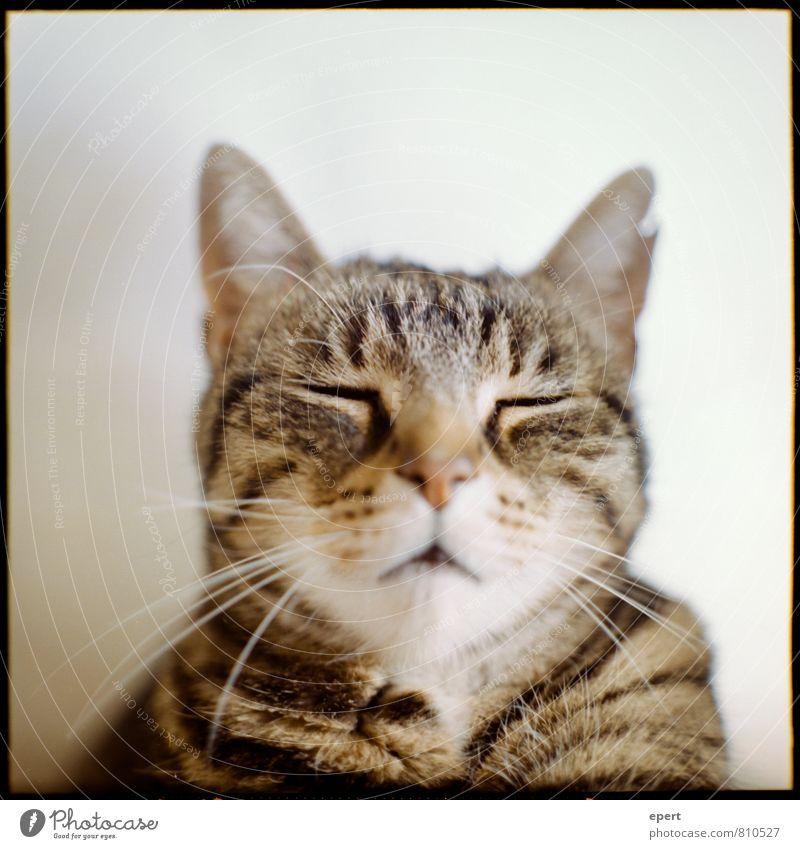 Des Paten Kater Katze Erholung ruhig Tier Denken Gelassenheit Haustier Meditation Langeweile analog stagnierend geduldig Mittelformat Selbstbeherrschung