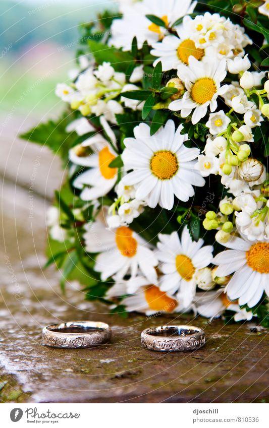 Hochzeit & Gänseblümchen Natur Pflanze schön Blume Freude Gefühle Liebe Blüte Glück Religion & Glaube Stimmung Zusammensein träumen Zufriedenheit Fröhlichkeit