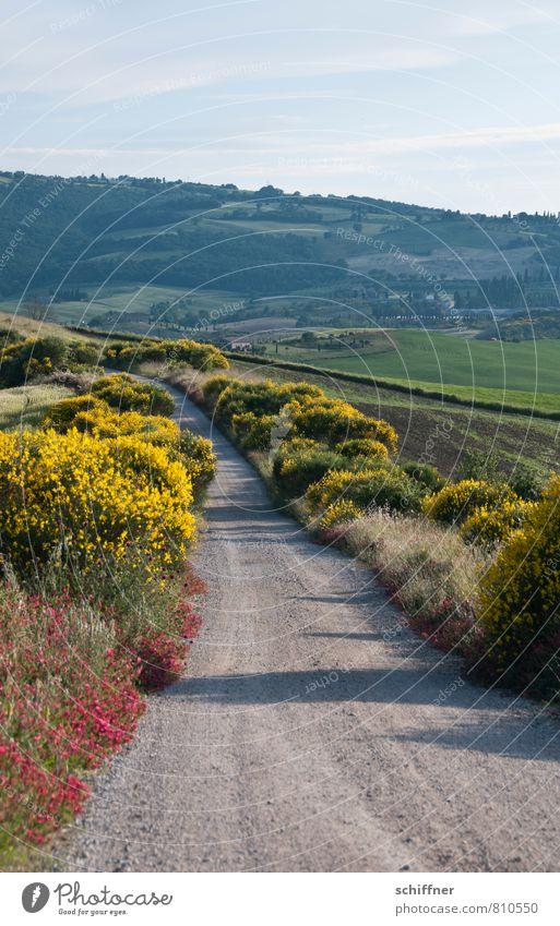 Der Weg Natur Pflanze Baum Blume Landschaft Wald Umwelt gelb Berge u. Gebirge Wiese Gras Feld Sträucher Klima Schönes Wetter Hügel
