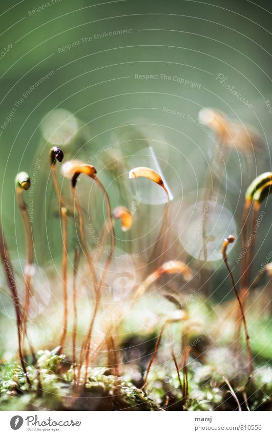 Gruppenfeeling | Mit ein bisschen Abstand Pflanze Sommer Herbst außergewöhnlich glänzend träumen leuchten authentisch Erfolg Blühend einfach dünn Samen Moos