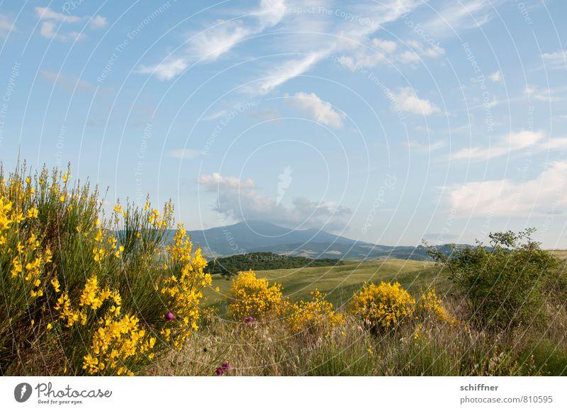 Weites Land mit Raps Natur Landschaft Pflanze Himmel Wolken Sonnenlicht Schönes Wetter Baum Blume Gras Sträucher Grünpflanze Nutzpflanze Wildpflanze Wiese Feld