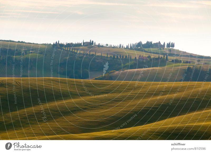 Wogendes Land Pflanze grün Sommer Baum Landschaft Wald Wiese Feld Wellen Schönes Wetter Hügel Italien Abenddämmerung Toskana Wellengang Pinie