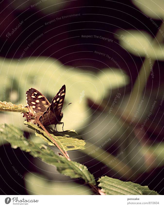 zeitlos Natur Sommer Herbst Schönes Wetter Sträucher Blatt Wald Tier Schmetterling 1 ästhetisch braun grün fliegen Blick Aussicht Erholung Gedeckte Farben