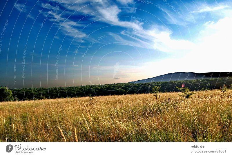 Sommerwiese Himmel Baum grün blau Ferne Wald Wiese Gras Berge u. Gebirge gold Rasen Niveau dünn Hügel trocken