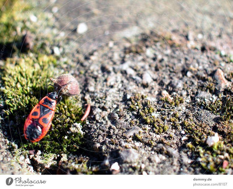 a bugs life wandern Käfer Kugel Leben kaz