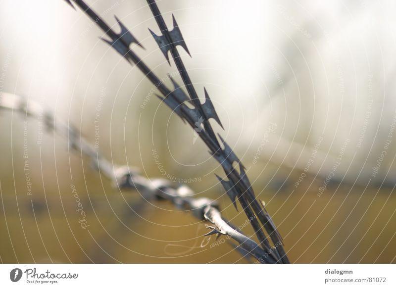 widerborstiges Idyll Stacheldraht widersetzen gefangen Ecke Grenze zynisch sinnlos stur unbarmherzig Zaun Erlaubnis Verbote blockieren festhängen Israel Krieg