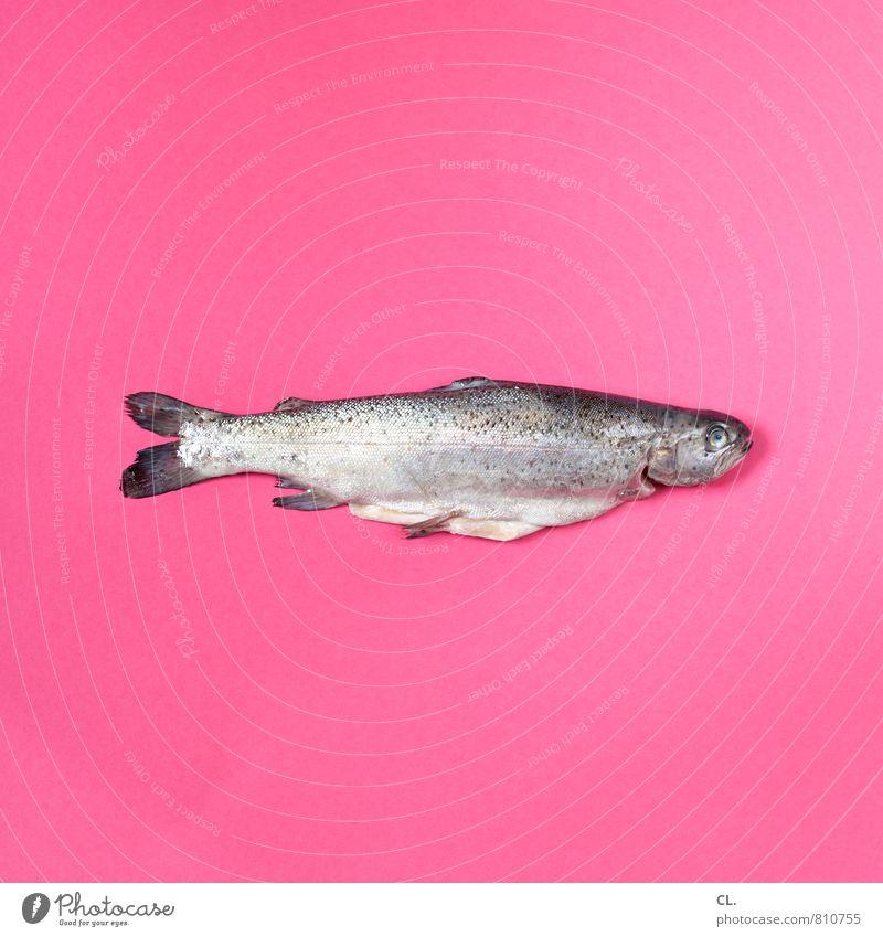 forelle Farbe Tier außergewöhnlich Lebensmittel rosa ästhetisch Ernährung Fisch skurril Totes Tier Forelle