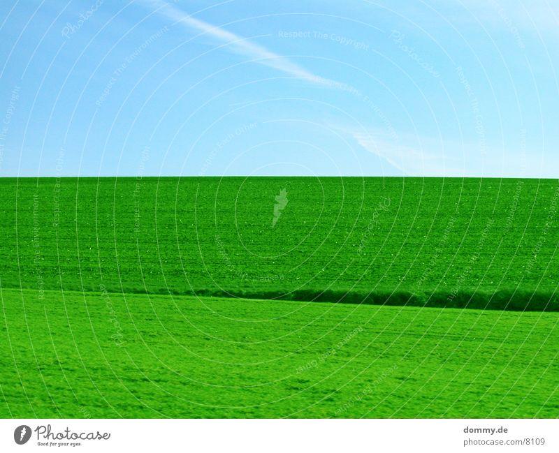 Picknick Zeit !!! Himmel grün blau Wiese Gras