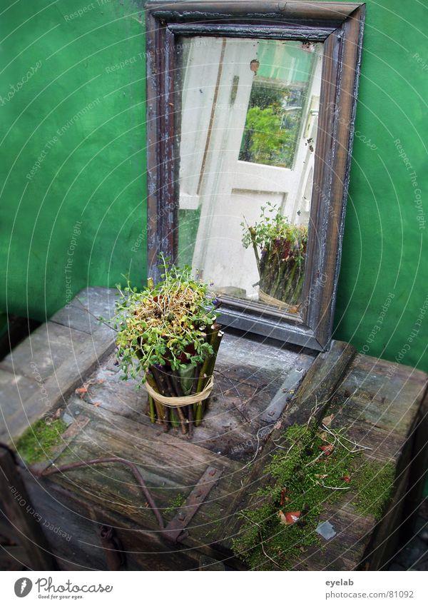 Feen Altar Pflanze grün Blume Holz Raum planen geheimnisvoll verfallen Spiegel Rahmen obskur Märchen Kiste Blumentopf 11