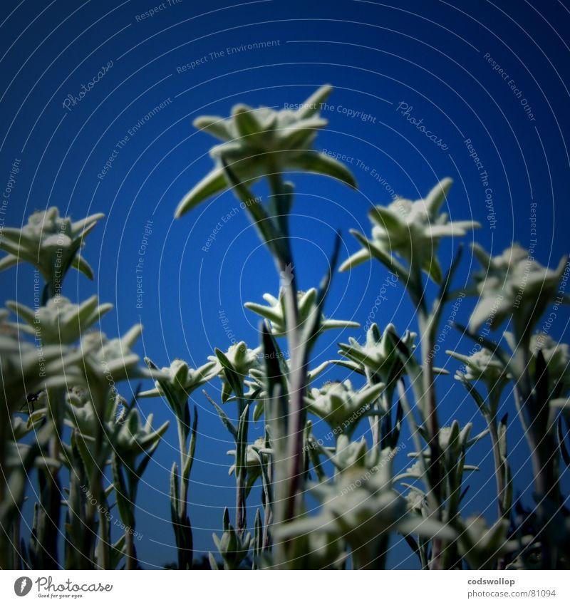 spacefleur Blume massiv obskur giant wierd blau lustig strange flowers blue Weltall
