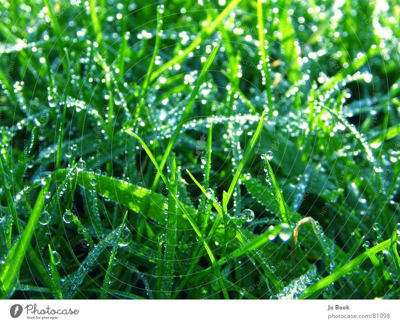 Grünes Gras Blaues Glas grün schön Wiese Tau Wassertropfen Grasland himmlisch Tropfen geschniegelt geschmackvoll Rasen Natur Leben grass eine augenweide