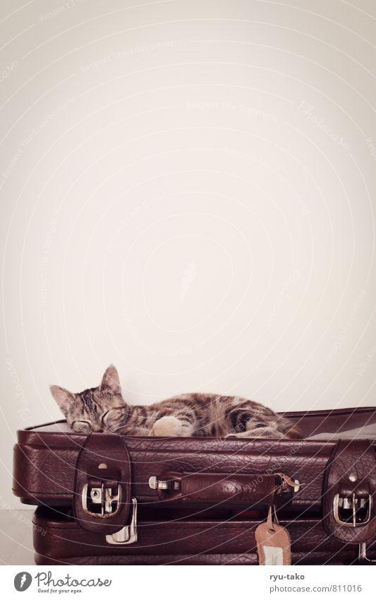 Pommef Tier Haustier Katze 1 Tierjunges Erholung genießen schlafen niedlich retro schön mehrfarbig Zufriedenheit Geborgenheit Tierliebe Gelassenheit ruhig