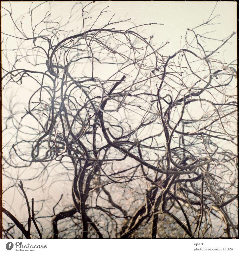 Verwirrung Natur Pflanze Baum Wege & Pfade Holz Sträucher verrückt Ast Locken Irritation Stress analog Zweige u. Äste verzweigt Mittelformat
