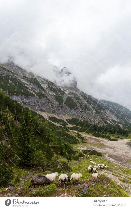Stau Natur Landschaft Erde Luft Wolken schlechtes Wetter Sturm Alpen Berge u. Gebirge Gipfel Tier Nutztier Herde frisch lustig grün vernünftig Reihe Reihenfolge