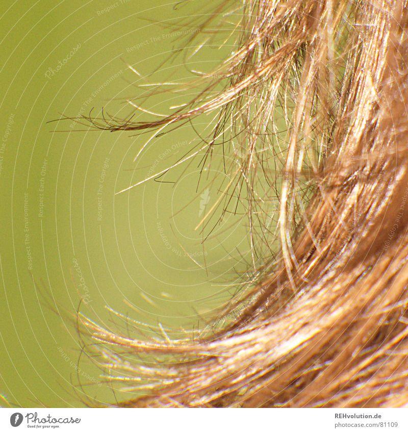 Haar-Ensemble 3 krause Haare Bad zerzaust kalt Haare & Frisuren trocken Wellen braun grün langhaarig gewaschen schön spannkraft struppig Friseur Spitze