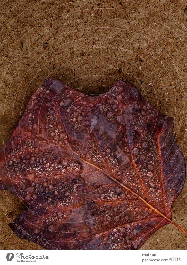 Fall fallen Blatt Herbst Garten Park Regen braun Vergänglichkeit