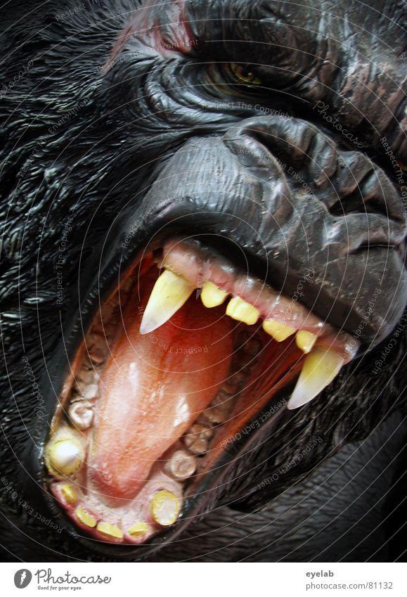 GING GONG schwarz Auge Haare & Frisuren Kraft Angst Nase gefährlich bedrohlich Fell Frieden Gebiss Urwald sanft Säugetier Zunge